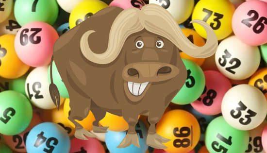 lotteria bufala